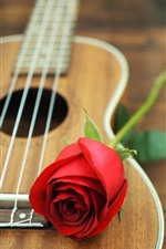 Red rose, guitar