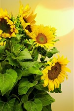 Preview iPhone wallpaper Sunflowers, sun