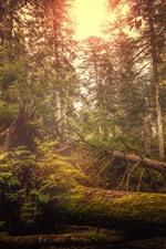 Switzerland, forest, trees, glare