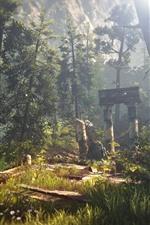 O Witcher 3, floresta, raios de sol