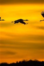 Vôo de três pássaros no céu, silhueta, por do sol