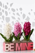 iPhone壁紙のプレビュー 三色ヒヤシンスの花、マカロン