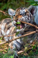 Preview iPhone wallpaper Tiger cub playful, twigs, grass