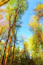 미리보기 iPhone 배경 화면 나무들, 녹색, 햇빛, 자연