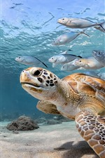 Preview iPhone wallpaper Turtle and fish, sea, underwater