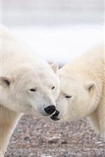 미리보기 iPhone 배경 화면 두 마리의 북극곰, 야생 동물