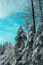 Preview iPhone wallpaper Winter, spruce, trees, snow