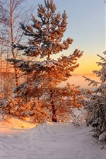 Winter, trees, snow, sunset
