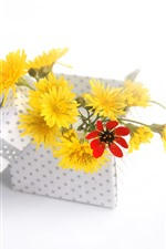 Yellow flowers, box, gift, white background