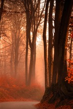 Preview iPhone wallpaper Autumn, red leaves, trees, road, fog