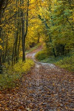 Autumn, trees, leaves, path