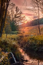 Preview iPhone wallpaper Autumn, trees, stream, sunset