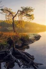 Beautiful autumn, lake, trees, sun rays, morning