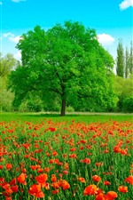 Preview iPhone wallpaper Beautiful summer, red poppy flowers, green grass and trees, sun rays