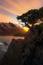 Beautiful sunset, rocks, tree, mountains, sea