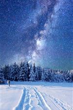 Belo inverno, árvores, floresta, neve, estrelada, estrelas