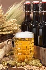 Beer, foam, wheat, hops, bottles