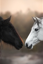 Preview iPhone wallpaper Black and white horses, face to face