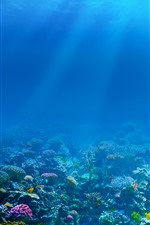 Blue sea, underwater, sun rays, fish, coral