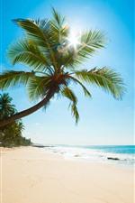 Caraíbas, mar, praia, palmeiras, raias do sol, tropicais