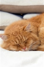 Preview iPhone wallpaper Cat in sleeping, bed, pillow
