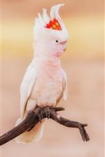 Aperçu iPhone fond d'écran Cacatoès, perroquet blanc