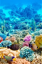 Colorful fish, corals, underwater