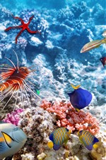 Preview iPhone wallpaper Colorful fish, underwater, sea, clownfish