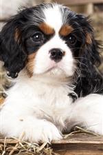 Cute dog and onion