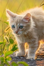 Cute furry kitten, backlight