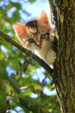 Cute kitten, tree, leaves, sun rays
