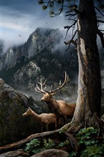 Deer, horns, mountains, trees, fog, birds