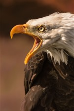 Preview iPhone wallpaper Eagle, angry, beak