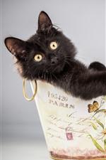 Preview iPhone wallpaper Furry black kitten, cute, basket, flowers