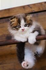 Preview iPhone wallpaper Furry kitten, stick, pet