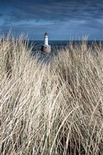 Grass, lighthouse, sea
