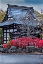 Japão, Numata, casas, árvores, outono