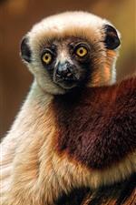 미리보기 iPhone 배경 화면 여우 원숭이, 귀여운 동물