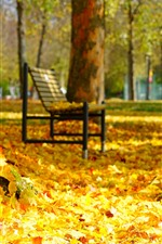 Many golden maple leaves, bench, trees, autumn, park