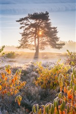 Morning, sun rays, trees, leaves, frost, autumn