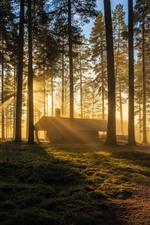 Morning, trees, sun rays, house, fog