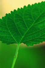Preview iPhone wallpaper One green leaf close-up, hazy background