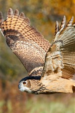 Owl flight, wings, wildlife