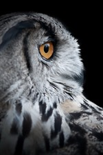 Owl head, eye, black background