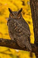 Owl, tree, yellow background