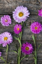 Pink and white asters, wood background