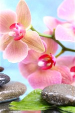 Preview iPhone wallpaper Pink phalaenopsis, stones