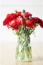Ranunculus, red flowers, bouquet, vase