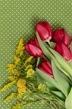 Red tulips, light green background
