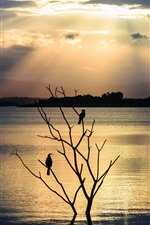 River, tree, two birds, silhouette